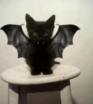 Le chaton noir vampire – Source