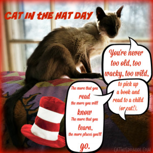 Cat in the Hat Day With Wacky, Wild and Weird Cats