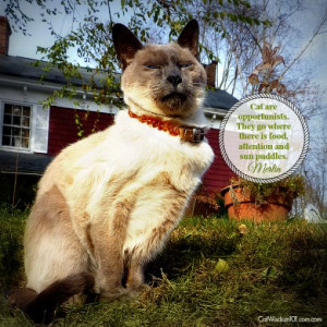 Wit and wisdom quotes from #cats