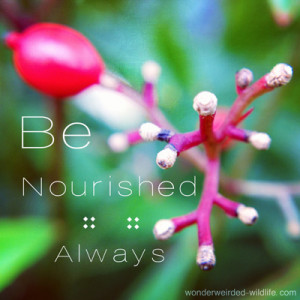 Motivational Picture Quotes with a macro shot of a primrose flower in ...
