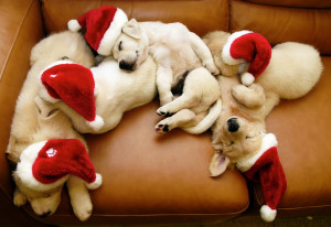 Cute Christmas Puppies and Dogs