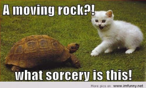 funny animals sayings