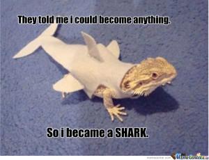 Funny Sharks Videos #1 Funny Sharks Videos #4 Funny Sharks Videos #5 ...