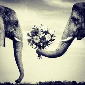 elephant quotes tumblr - Google Search
