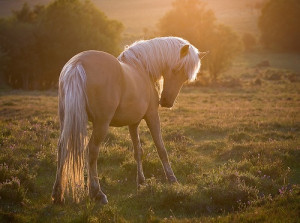 Palomino horse--OMG! It's AppleJack (if you loved My Lil Pony in the ...