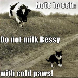 funny cow farm quotes quotesgram