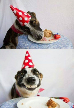 Happy Birthday | Funny As Duck | Funny Pictures