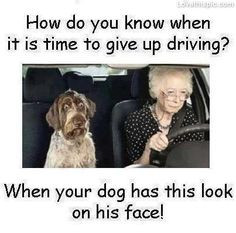 give up driving funny quotes quote lol funny quote funny quotes humor ...