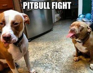 Pit Bull Fight - Dog humor