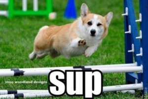 What's up ? | funny-pics.co