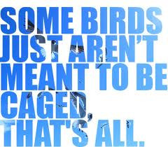 Some Birds Just Aren't Meant To Be Caged, That's All - Birds Quote