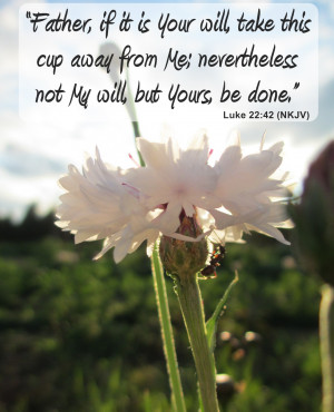 Surrender To God Quotes I was like Okay God