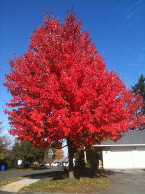 Leaves changing color in the