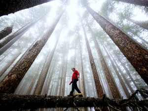 Hiking Olympic National Park .. You're gonna be AMAZED