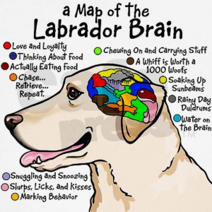 Yellow Lab Brain Shirt/ but applies to ALL Labs