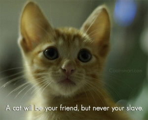 Quotes and Sayings About Cats