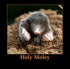 Funny Quotes, Jokes and One Liners About Moles