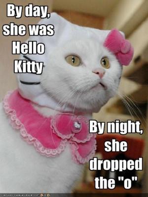 LOL Funny LOL Pics of cats