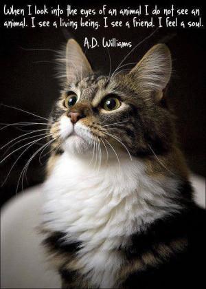 Love My Cat Quotes