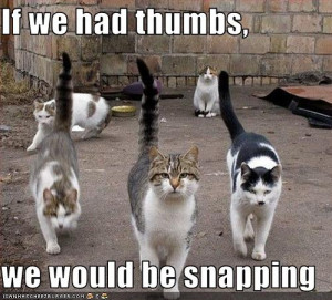 Funny Cats and Pictures - The Chris and Cathy Show