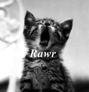 Rawr - cats Fan Art