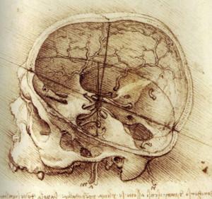 Leonardo Da Vinci anatomy drawing! ~