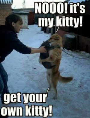 ... captions - part 19 (30 pics), funny dog meme, no this is my kitty