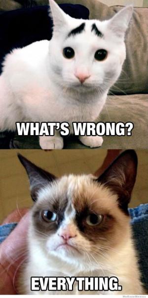 Concerned Cat meets Grumpy Cat