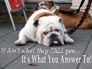 Inspirational Quote – It Ain't What They Call You – Sad Dog