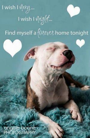 rescue a homeless dog