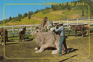Big Jack Rabbits Saddling up big jack