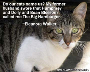 cat quotes famous cat quotes cute cat quotes curiosity killed the cat ...