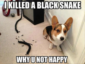 30 Funny animal captions - part 8, funny animal meme, animal pictures ...