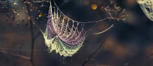 Spider web Facebook cover
