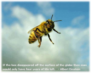Bee and Einstein Quote