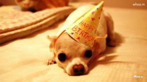 Happy Birthday Funny Dog Wallpaper
