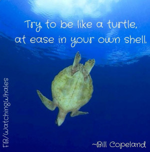 Turtle quote via www.Facebook.com/WatchingWhales