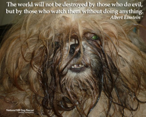 Animal Rescue Quotes And Sayings National mill dog rescue