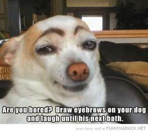 bored draw eyebrows dog animal laugh till next bath funny pics ...