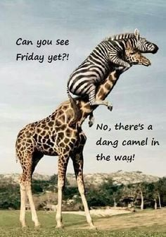 ... to explain the hump day camel in-between, cuz I didn't get it :) More