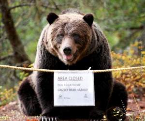 funny-pics-grizzly-bear-hazard.jpg