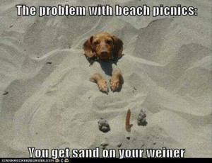 funny weiner dog meme Monday Random Funny Pictures Gallery