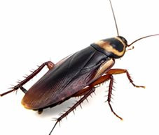 Compare Cockroach Exterminator Price Quotes