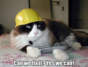 Funny Random Cat Pictures With Quotes | Image 55 of 71.