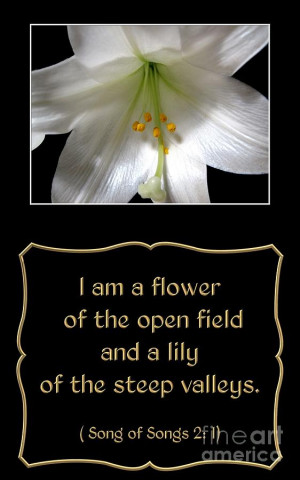 Easter Lily With Song Of Songs Quote Photograph