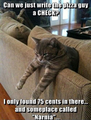 cat pictures funny funny cat pictures with captions humor lolcats