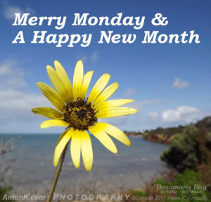 Merry Monday & a Happy New Month yellow flower Beaumaris Port Phillip ...