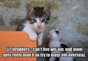 Funny Brothers and Sisters - Must See