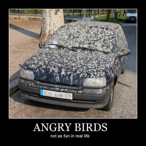 Funny Quote – Angry Birds + Car = Bird Poop Madness
