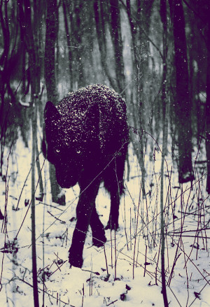 ... wolves Lobo darkness pagan viking norse Odin asatru Dark Ambient ulv